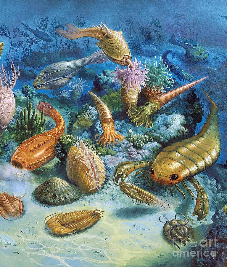 History of life Cambrian explosion Fossils evidence